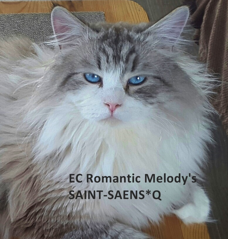 EC Romantic Melody's SAINT-SAENS*Q