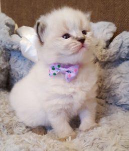 Żywienie kotów – tauryna