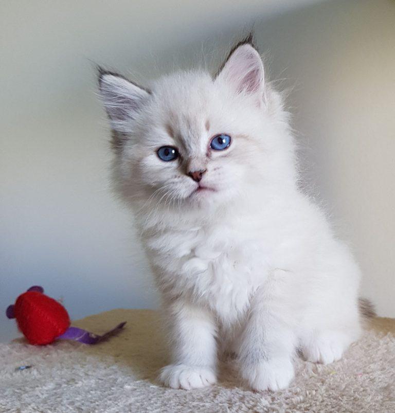 Zapraszamy do obejrzenia filmiku z naszymi ślicznymi kotkami.