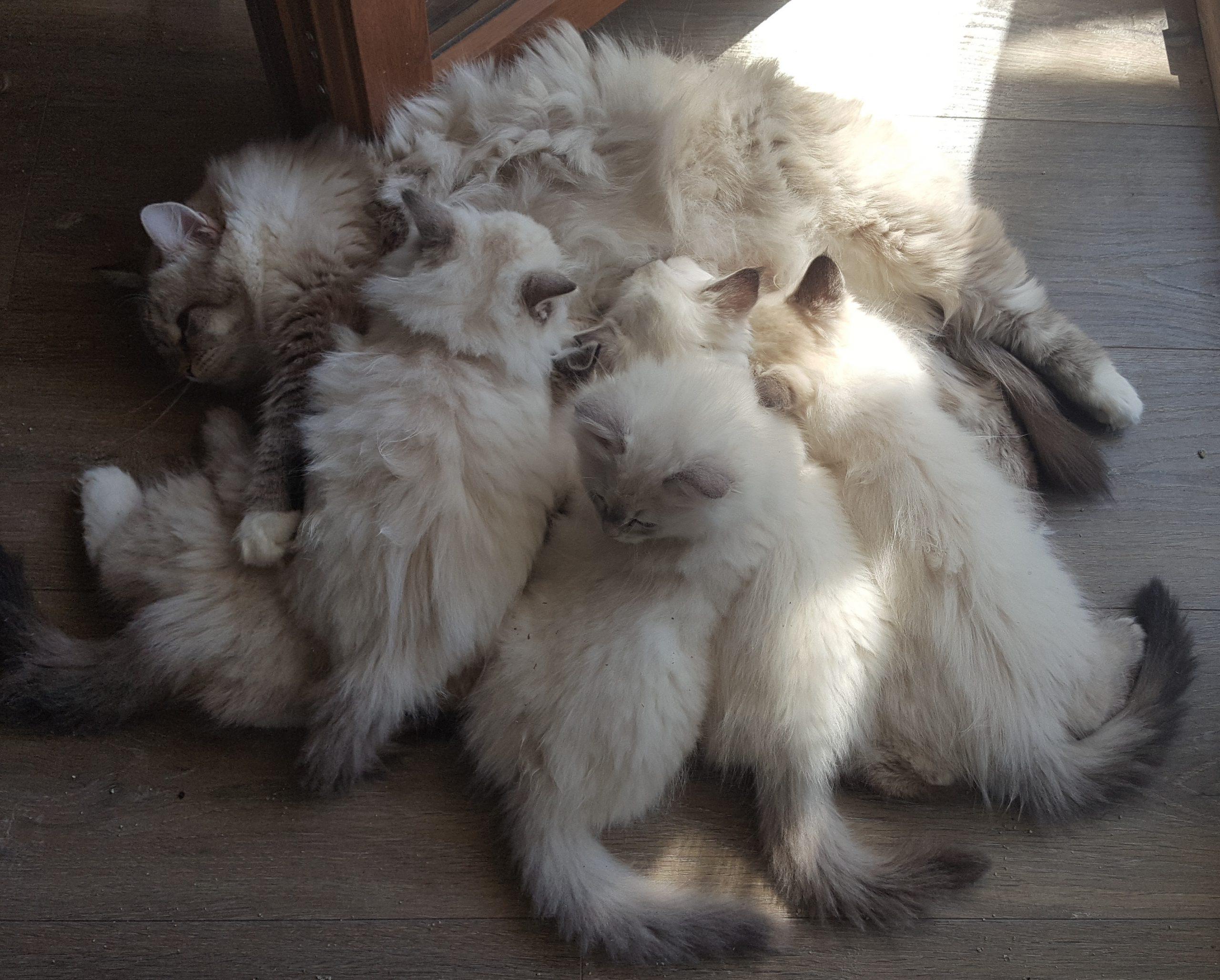 Żywienie kota – kilka podstawowych informacji
