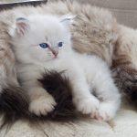 T_Luna Małe Białe