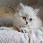 Tosia Małe Białe